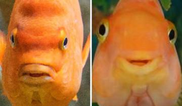 рыбы улыбаются