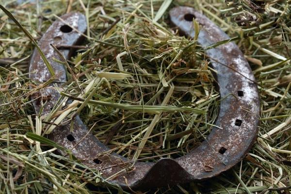 подкова в траве